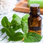 huile-essentielle-menthe-poivree (DR) TTQTP